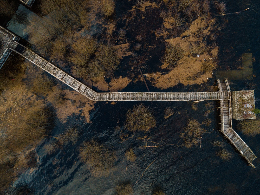 aerial view of white bridge in the middle of forest