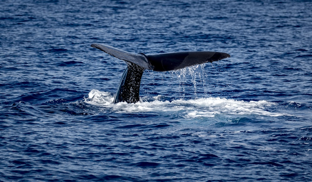 whale tail in the middle of the sea