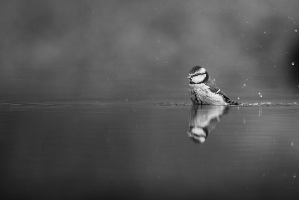grayscale photo of bird on water