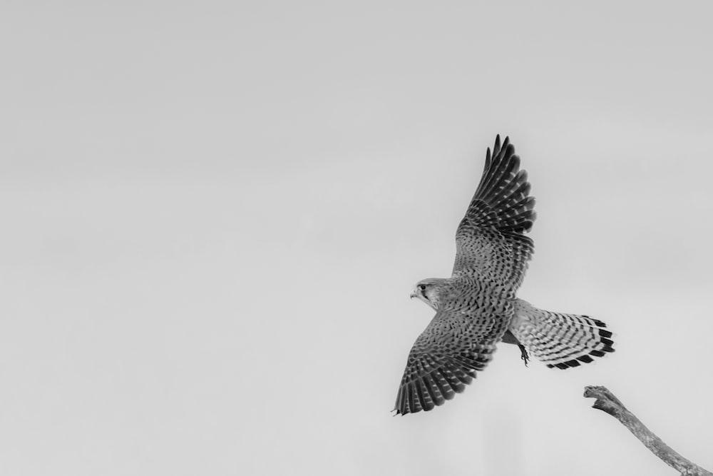 black and white bird flying
