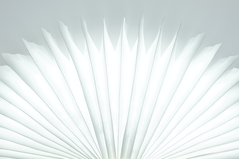 white and gray feather in close up photography