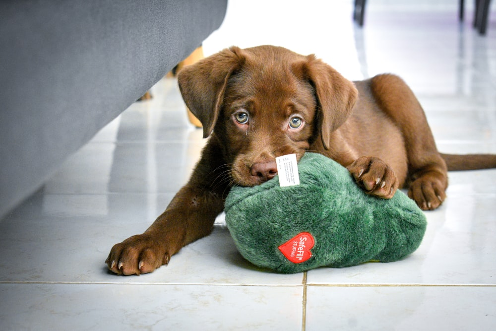 brown short coated puppy lying on green textile