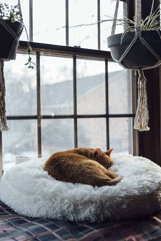 orange tabby cat lying on white textile