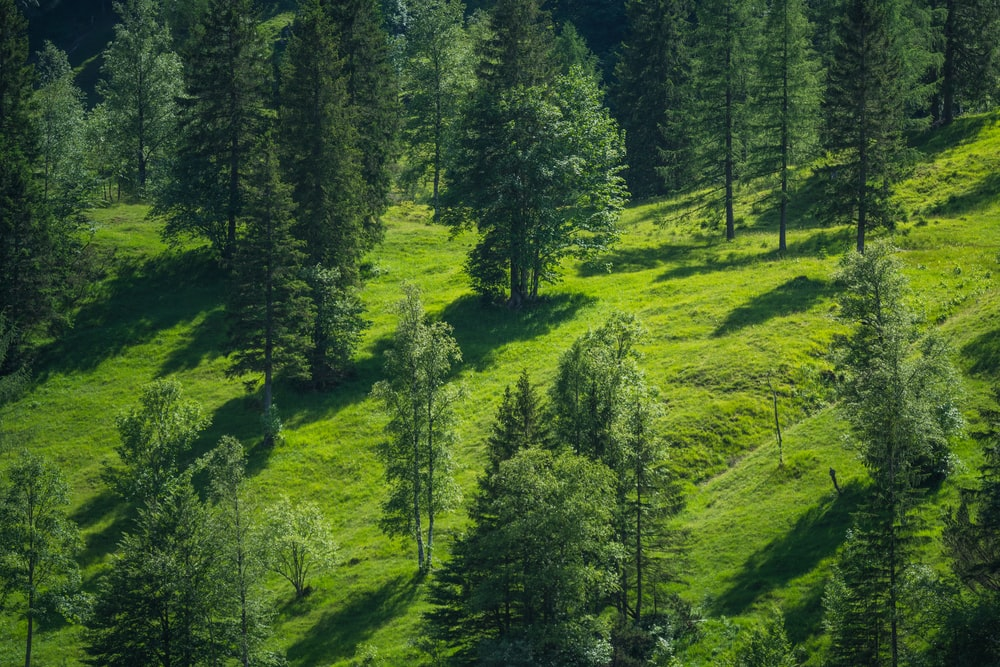 green trees on green grass field during daytime