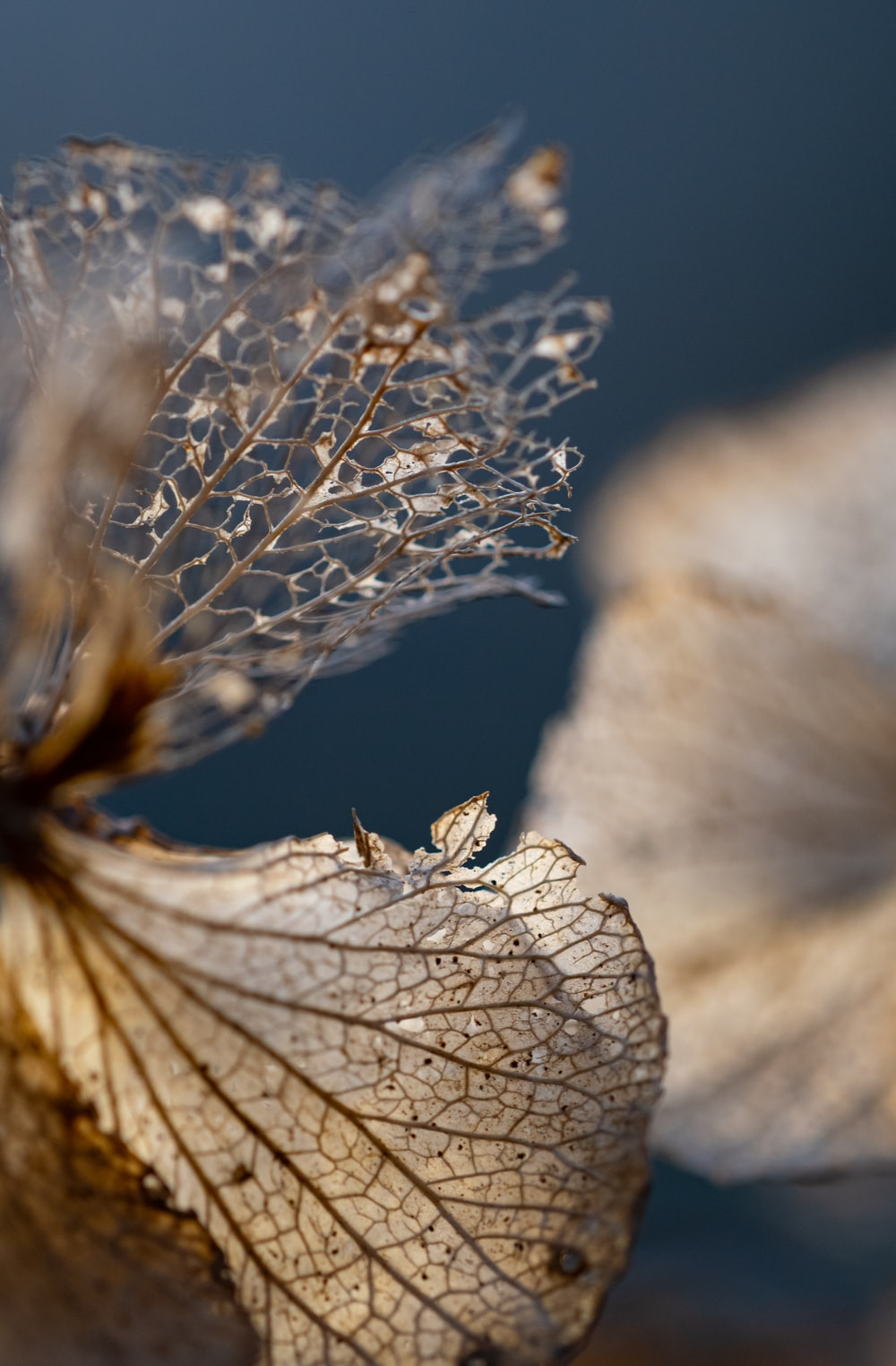 white and brown leaf in close up photography