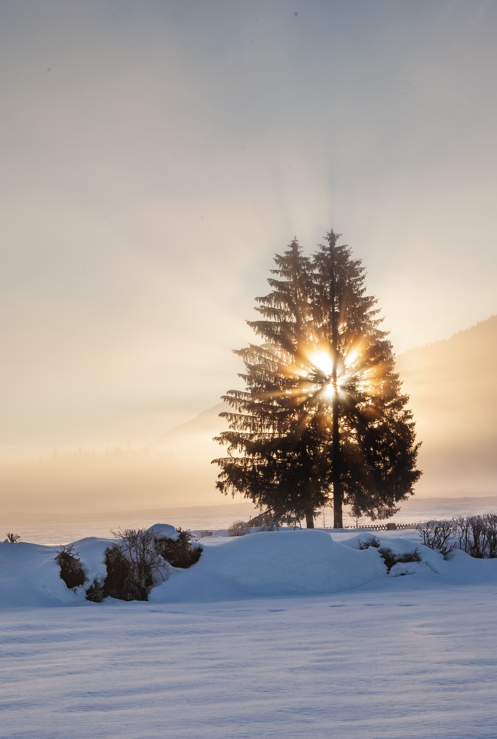 green tree on snow covered ground during daytime
