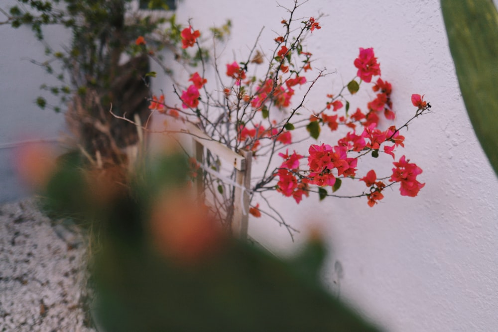 red flowers with green leaves