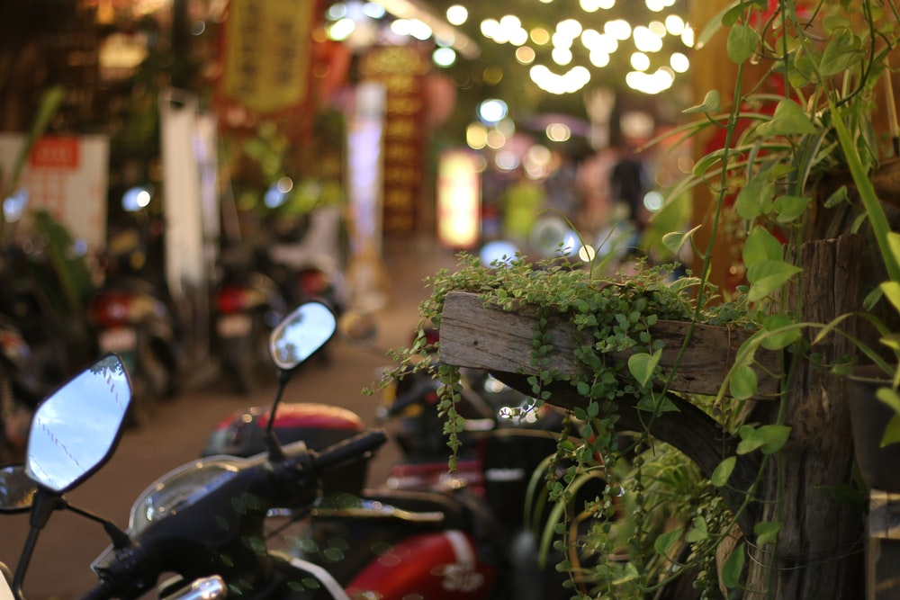 black motorcycle parked beside green plants during daytime
