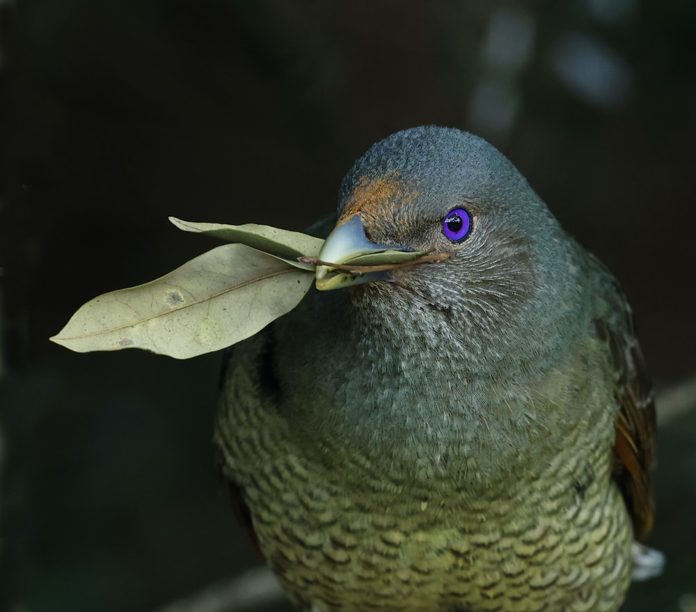 blue and brown bird on green leaf