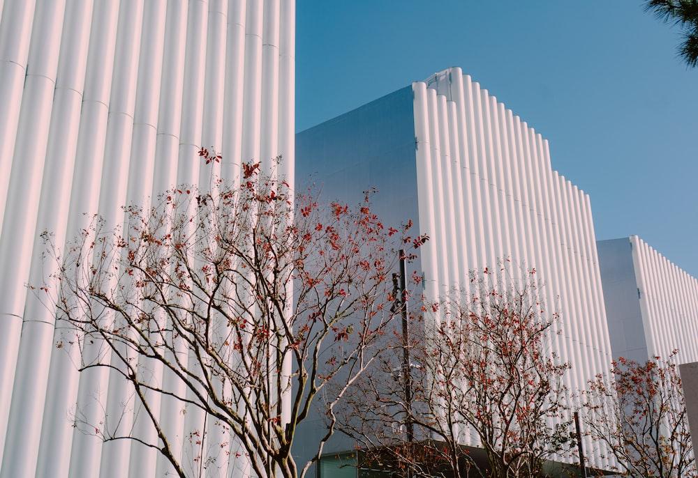 bare tree near white building