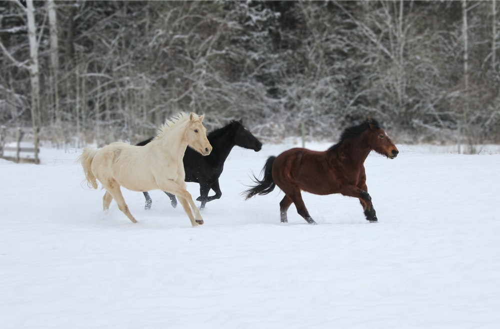 brown and white horses on snow covered ground during daytime