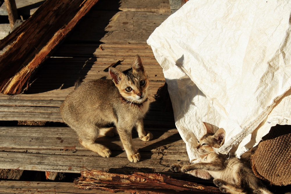 brown cat on brown wooden plank