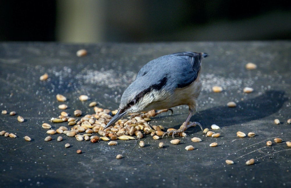 blue and white bird on brown and black pebbles