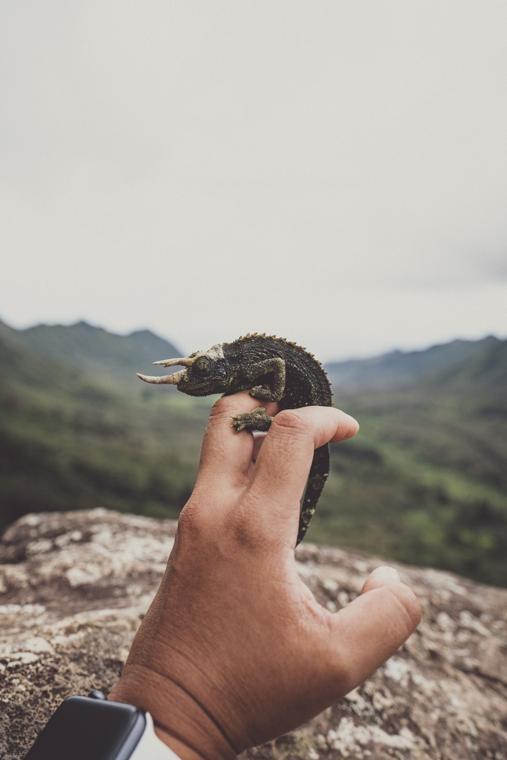 person holding black and brown turtle figurine
