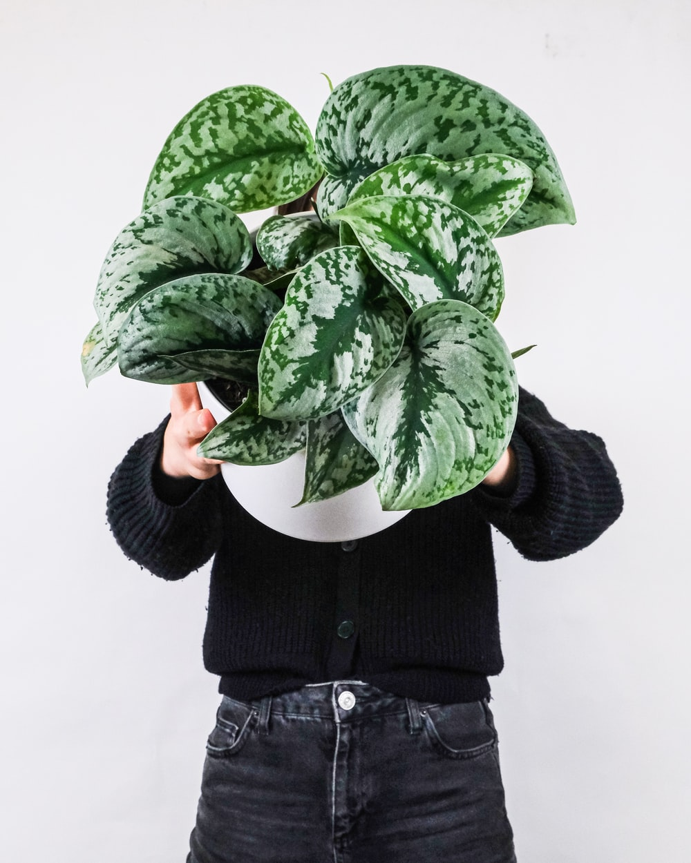 person in black jacket holding green leaves