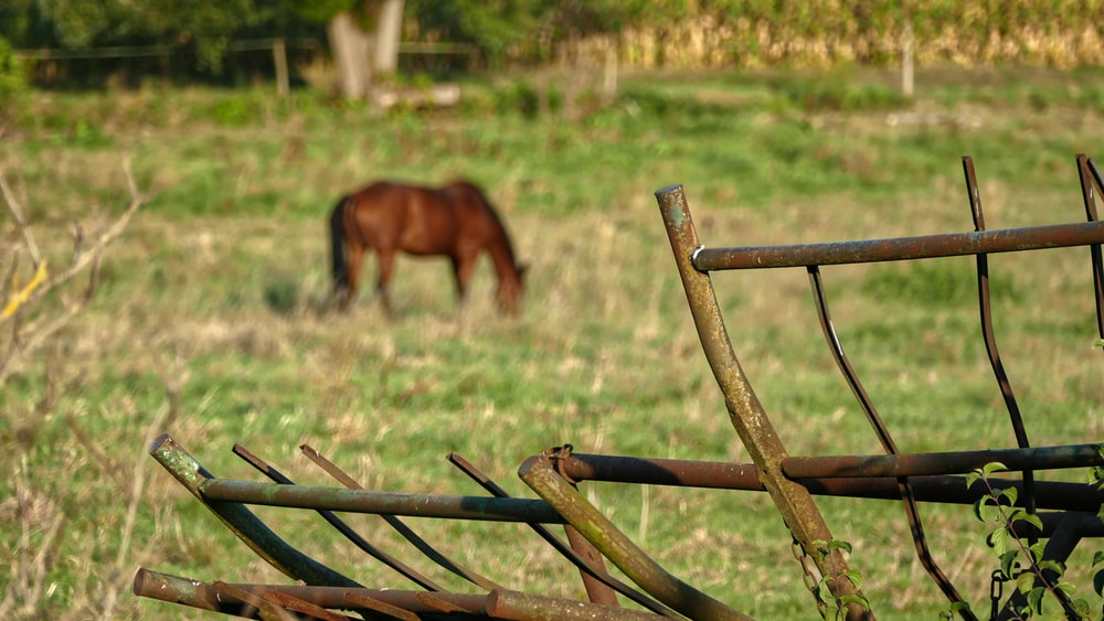brown horse eating grass during daytime