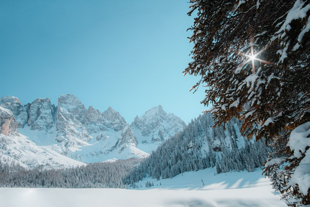 snow covered trees and mountains during daytime
