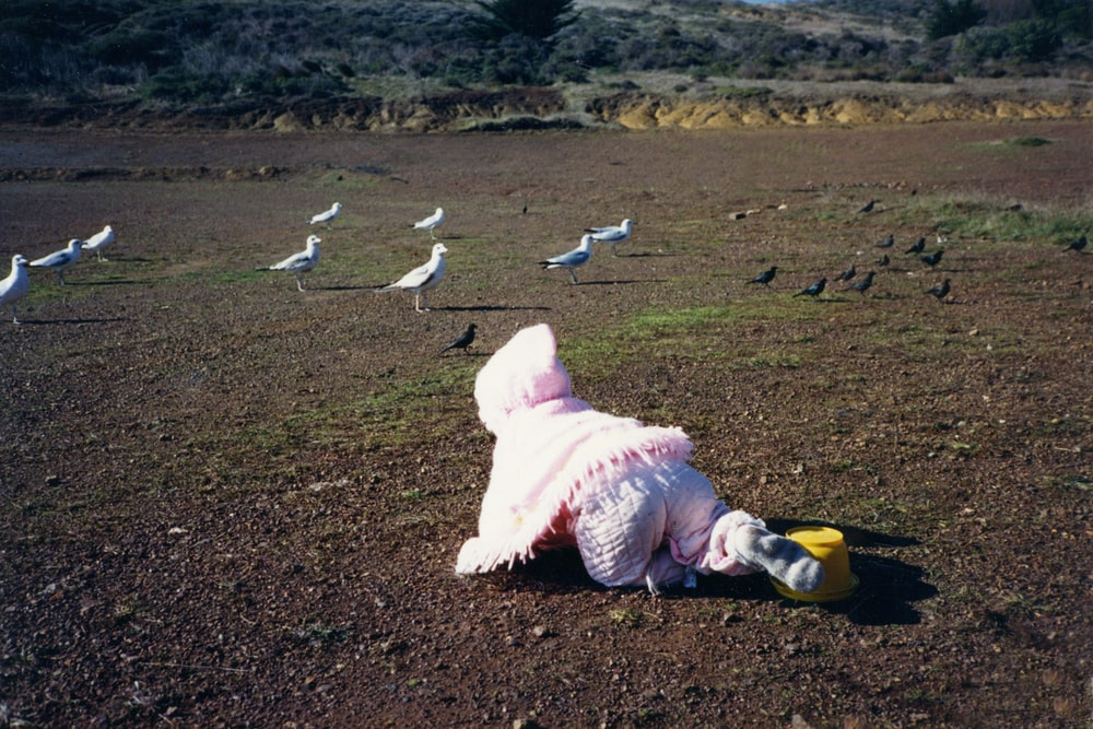 white bird on brown field during daytime