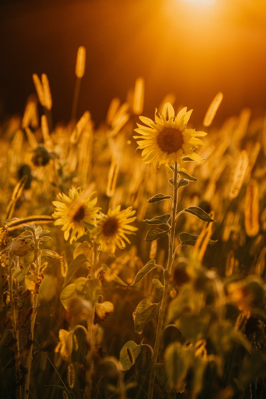 yellow and brown flower in tilt shift lens