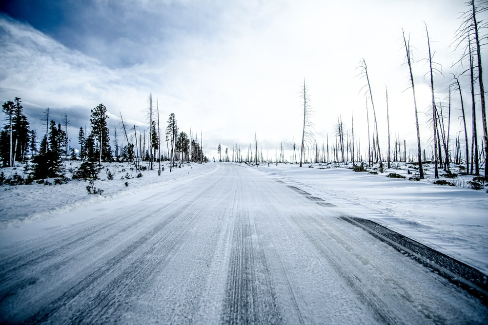snow covered road between trees under white sky during daytime