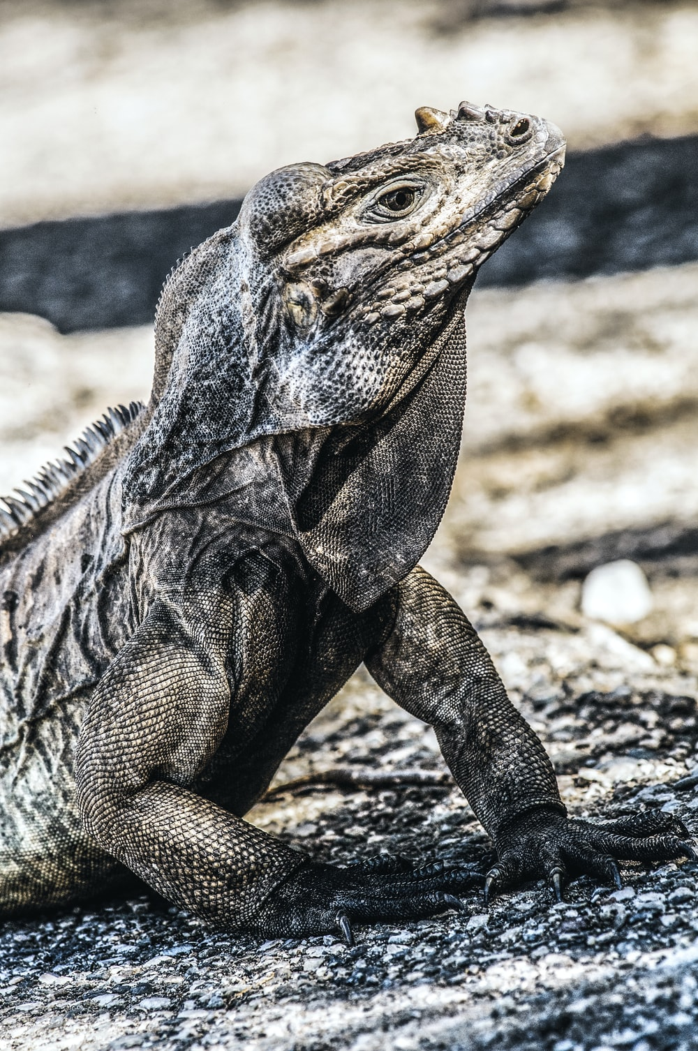 brown and black bearded dragon on brown soil during daytime