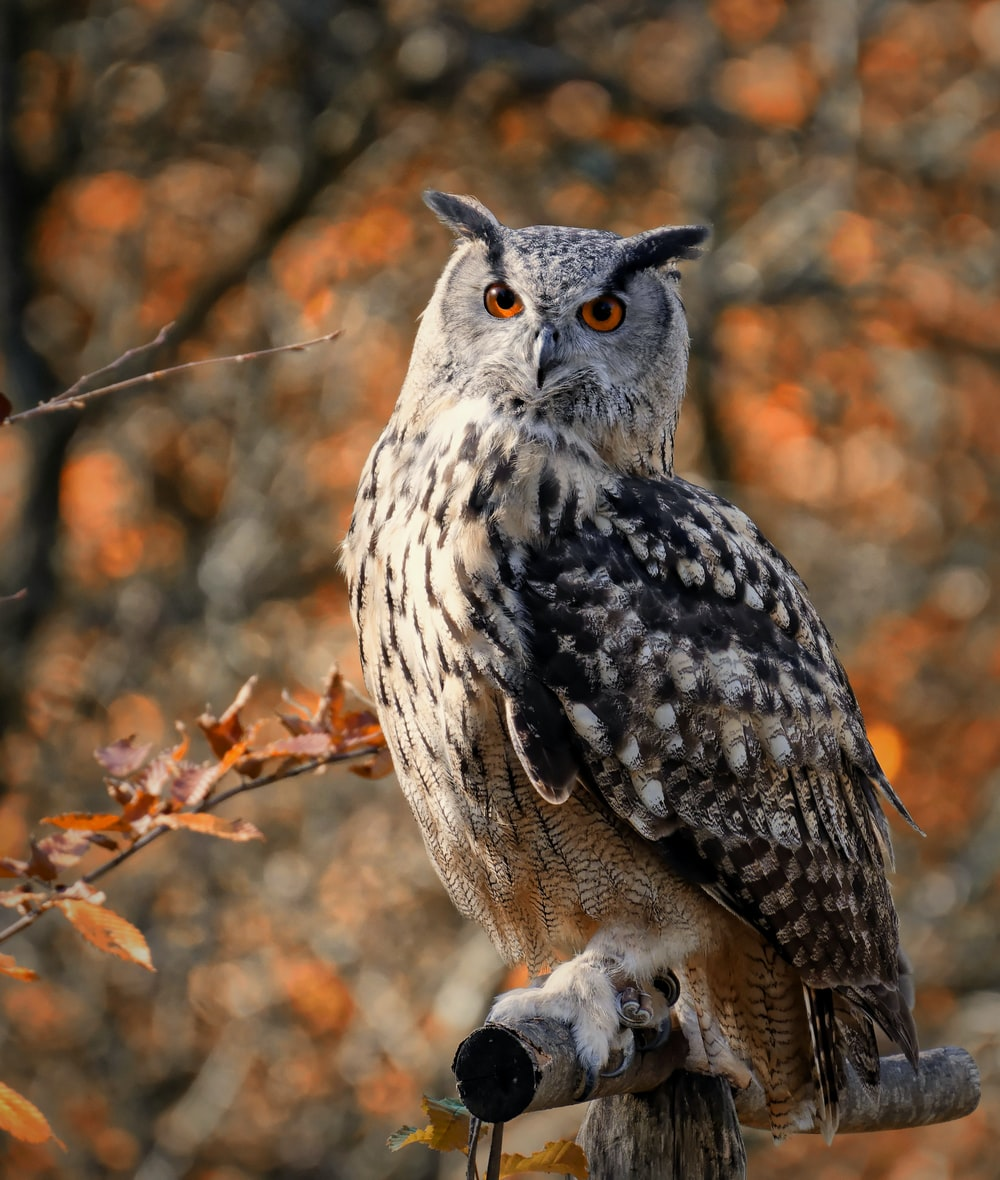 white and black owl on brown tree branch during daytime