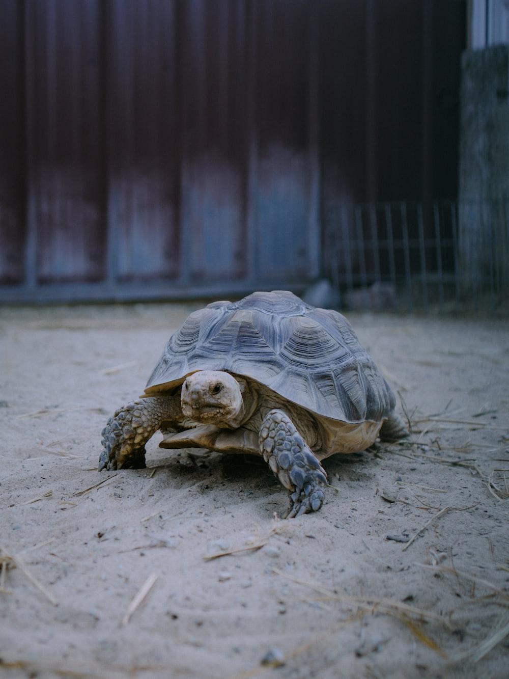 brown turtle on gray concrete floor