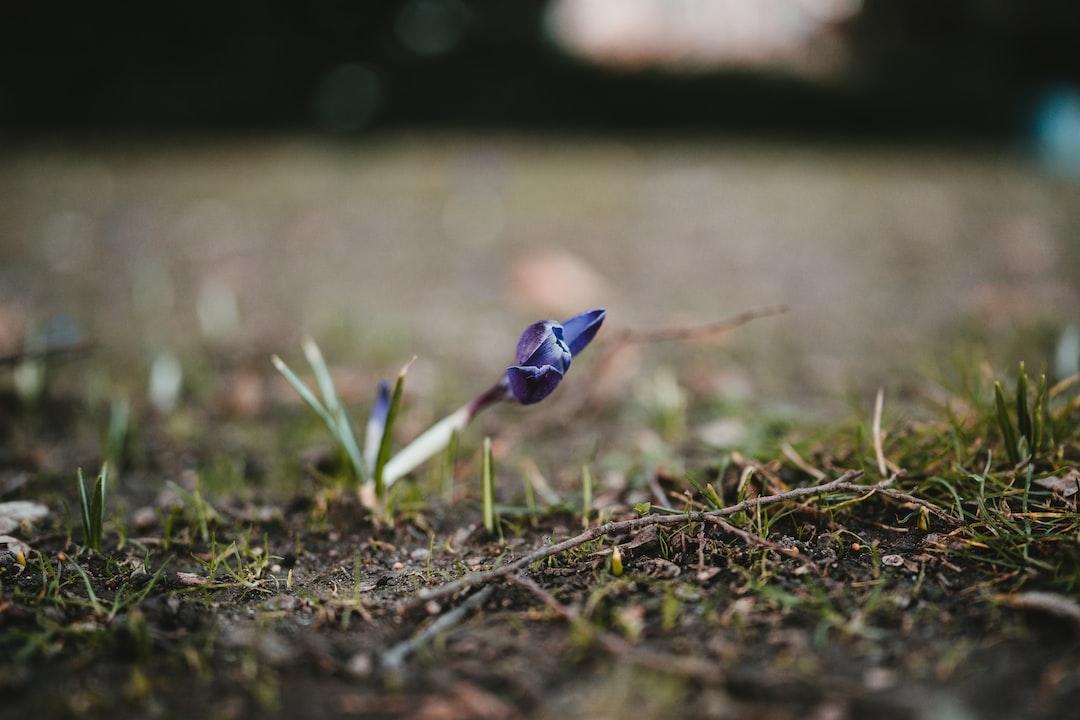blue flower on brown soil