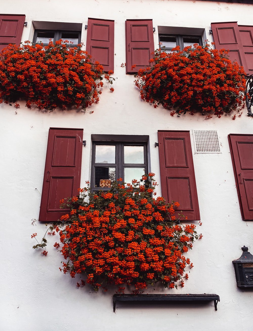 red and orange flowers on brown wooden window
