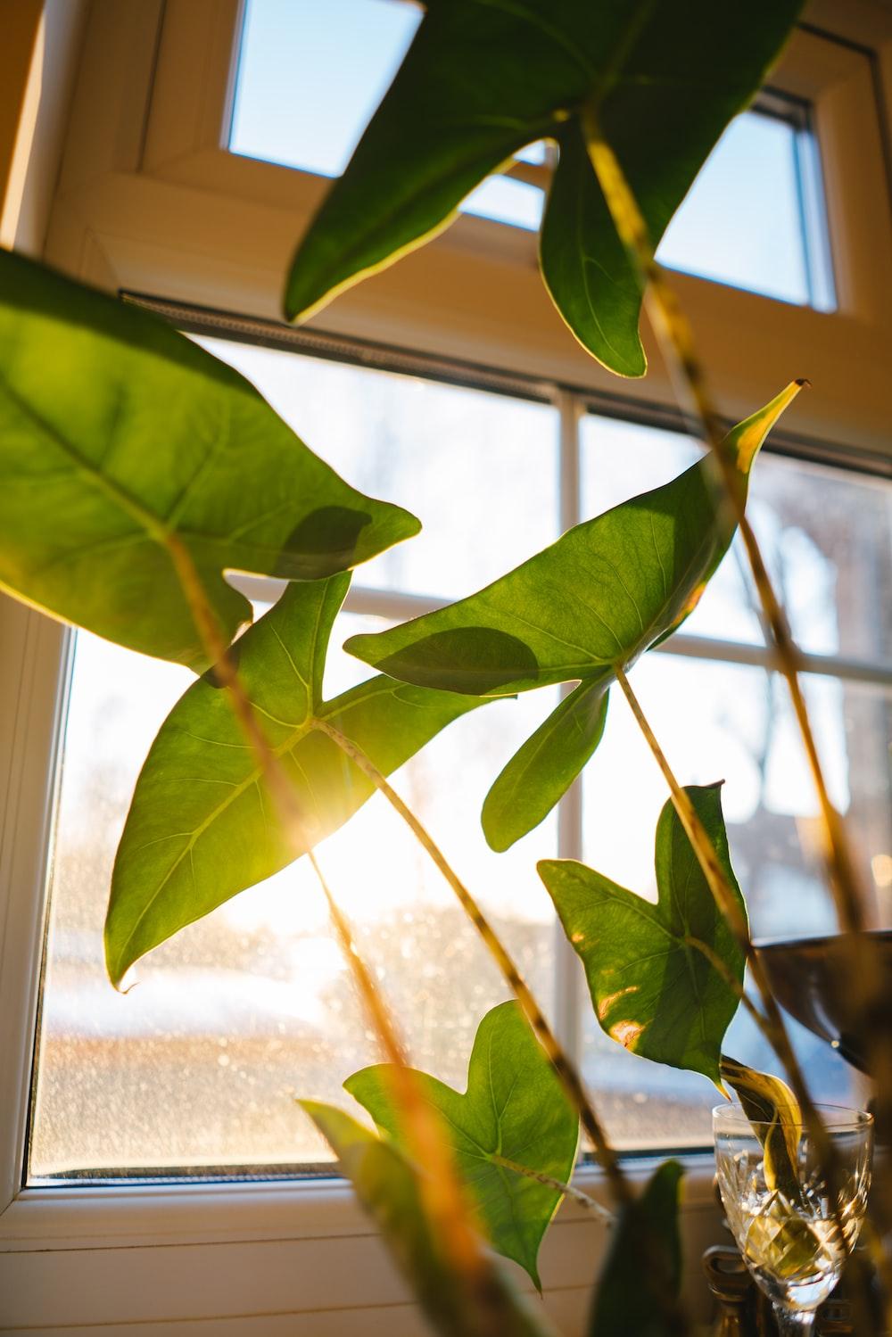 green leaves near glass window