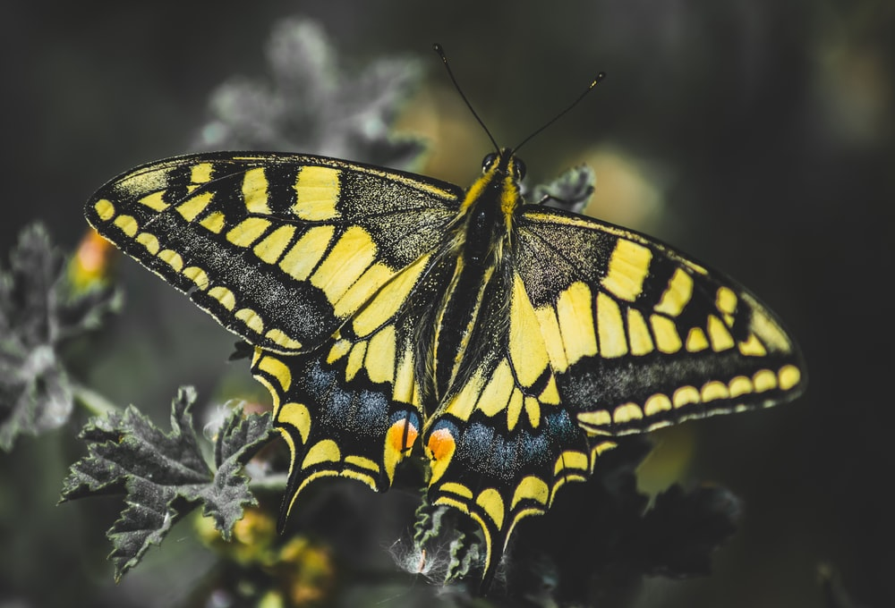 black and yellow butterfly perched on white flower in close up photography during daytime