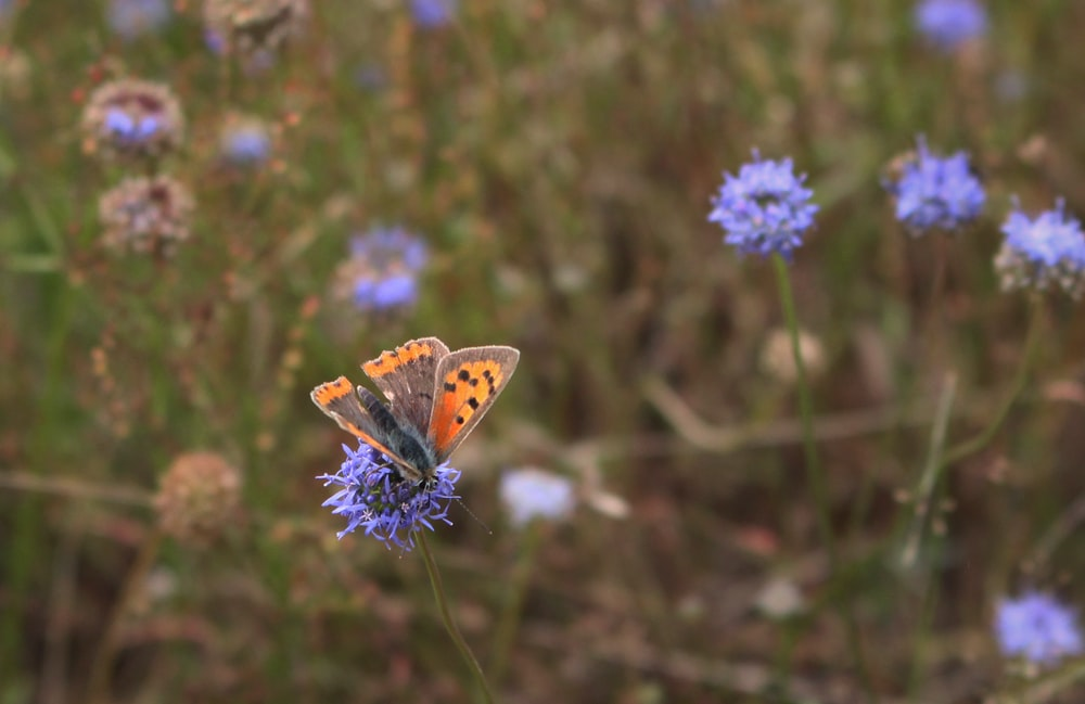 orange black and white butterfly perched on purple flower in close up photography during daytime