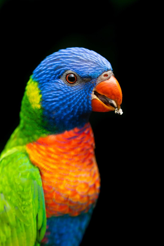 blue green and orange bird