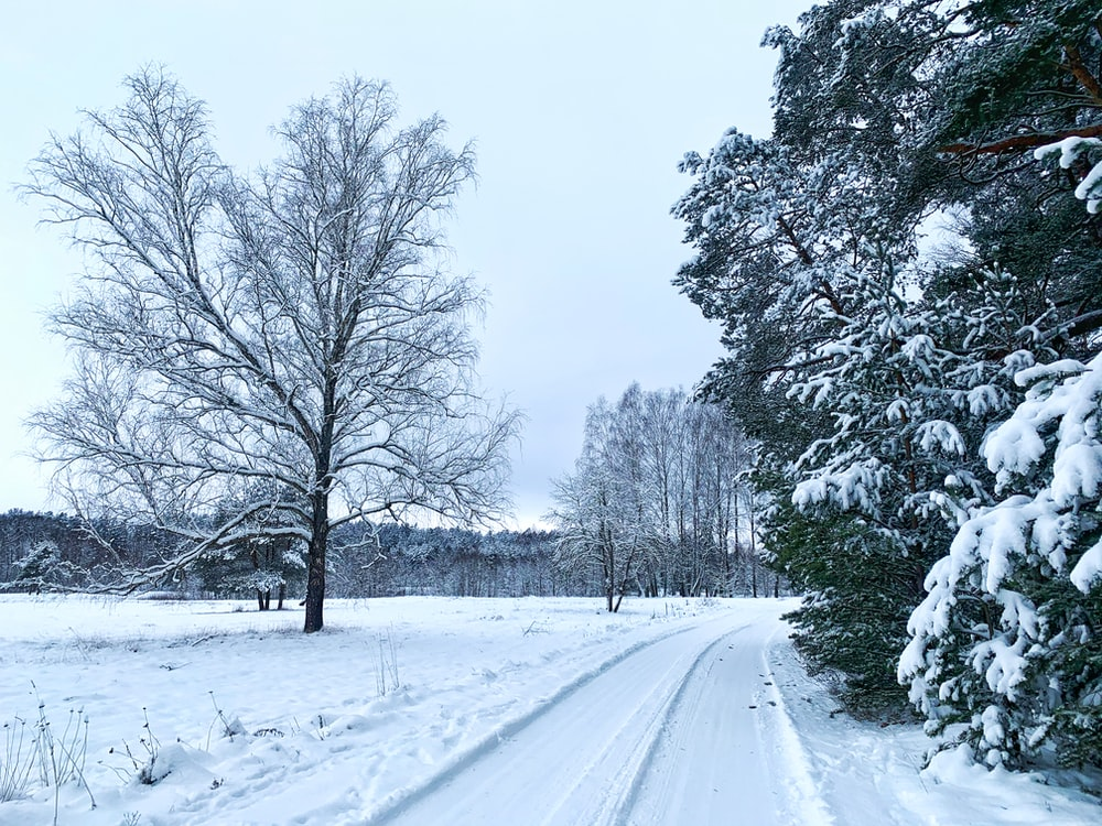 snow covered road between trees during daytime