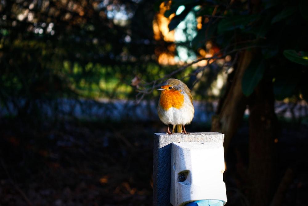 brown and white bird on white wooden birdhouse