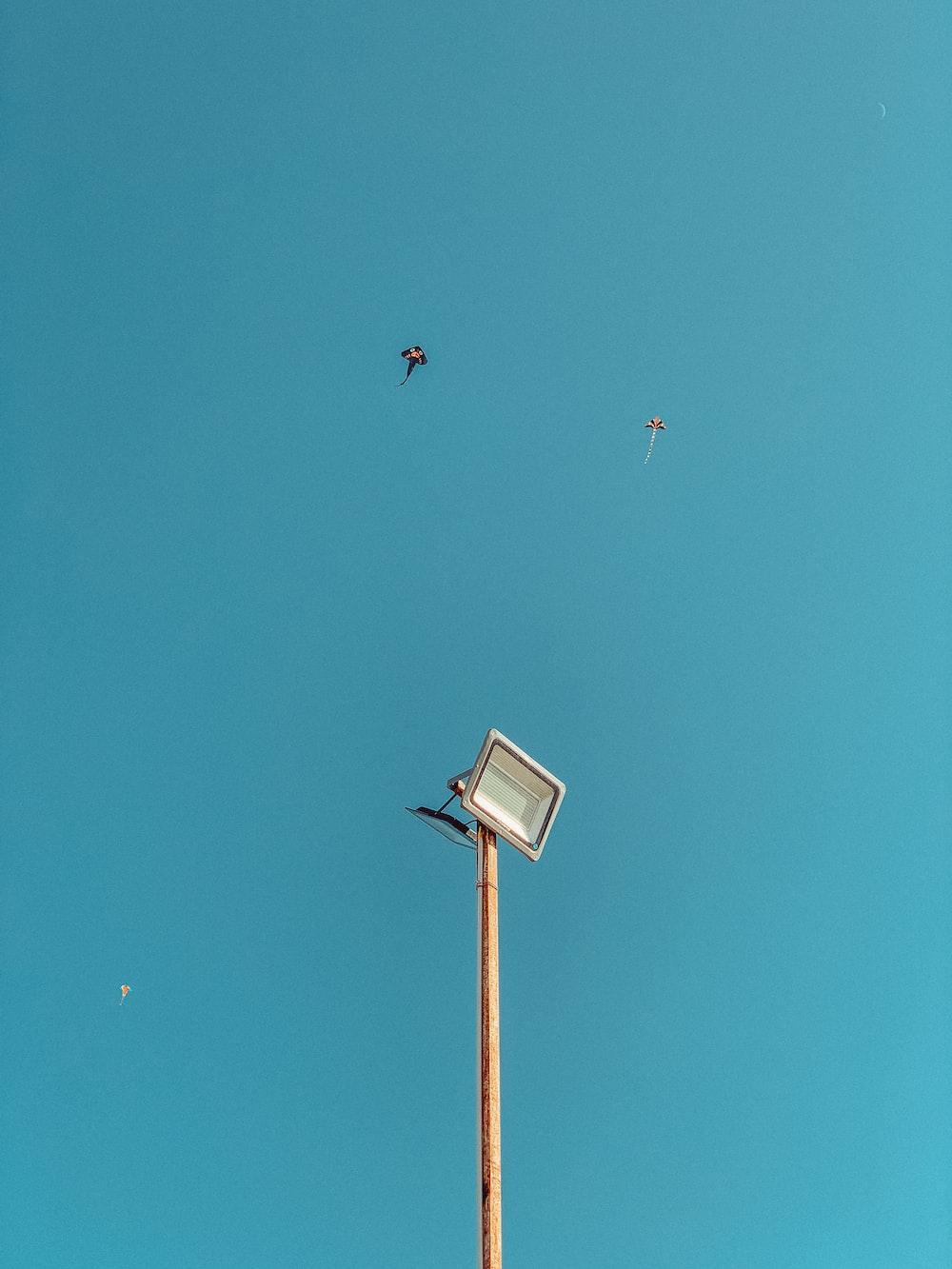 black and white bird flying over the street light