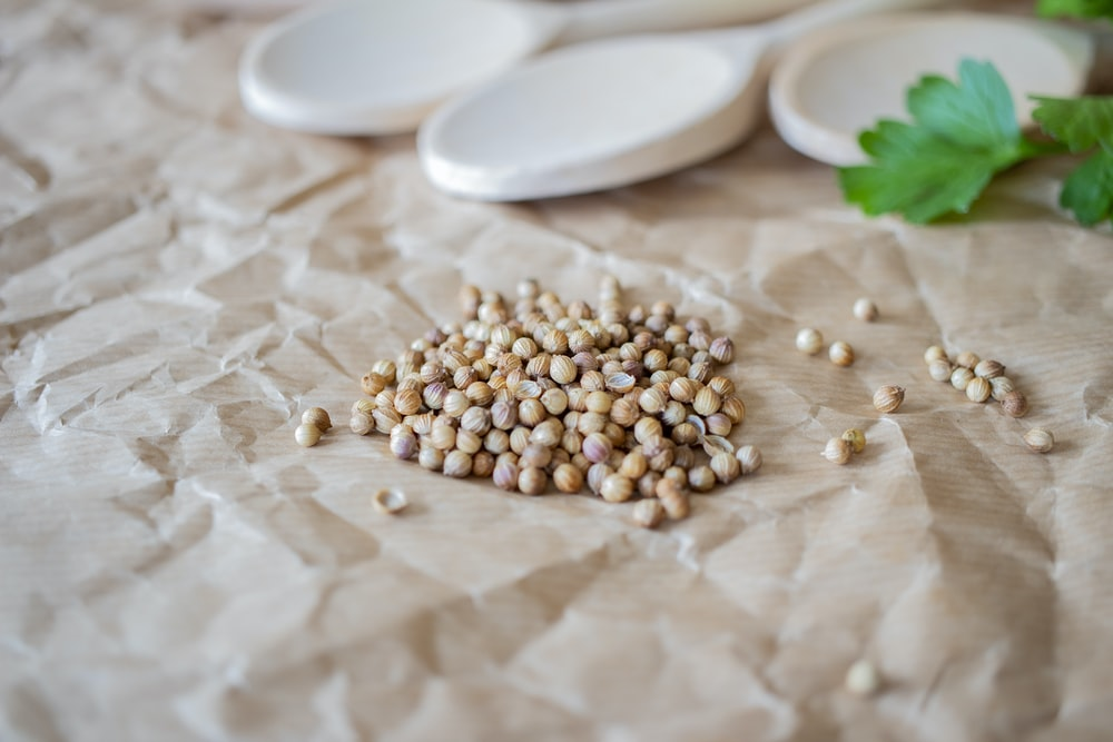brown beans on white ceramic plate