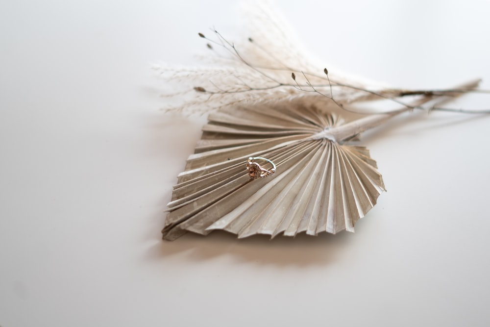 white and brown feather on white surface