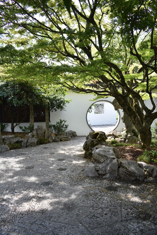 green tree near white concrete house during daytime