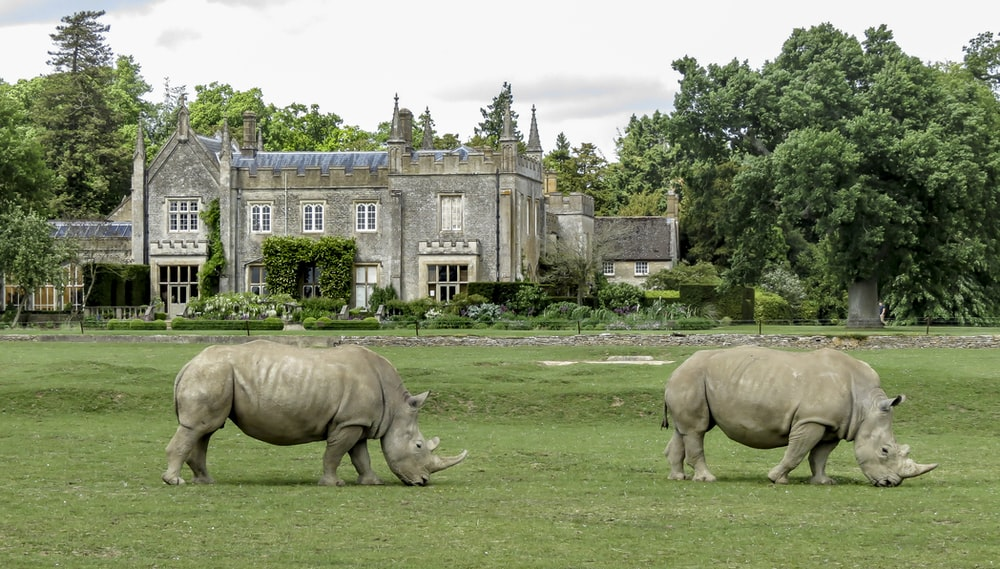 brown rhinoceros on green grass field near brown concrete building during daytime