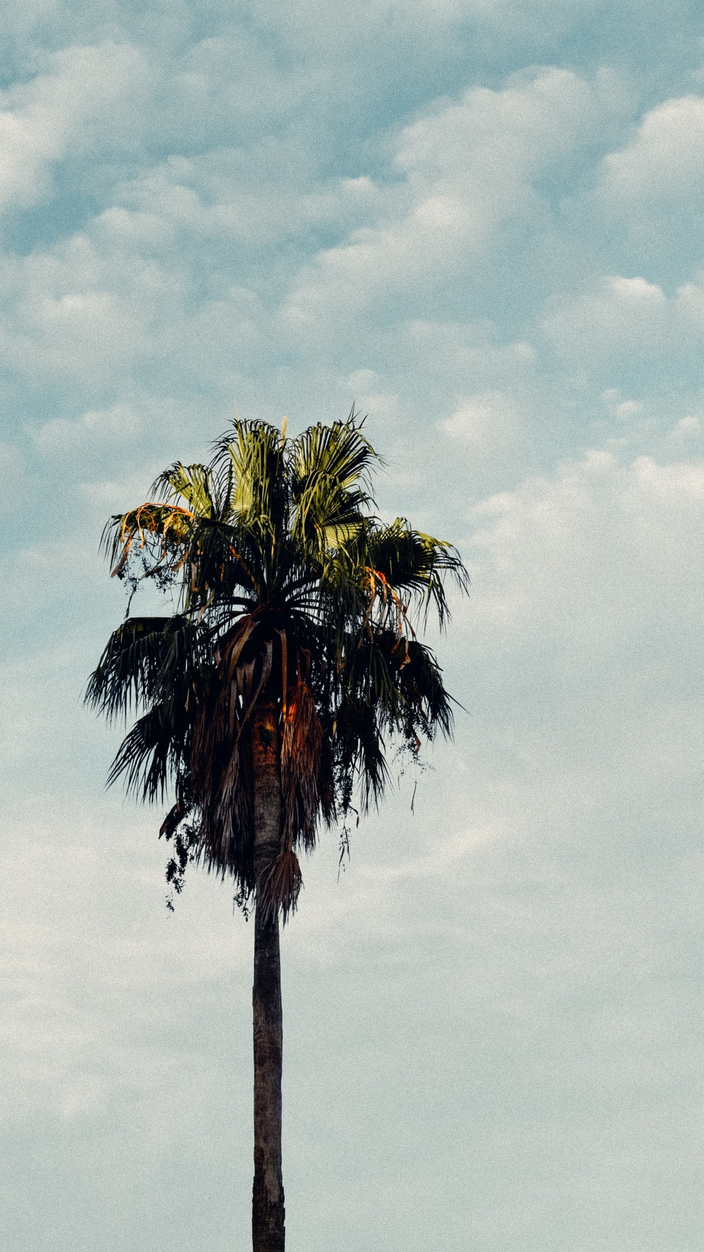 green palm tree under white clouds