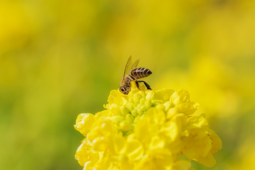 yellow and black bee on yellow flower