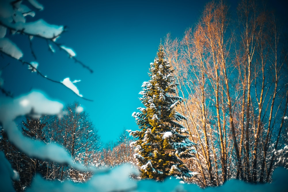 brown tree covered with snow during daytime