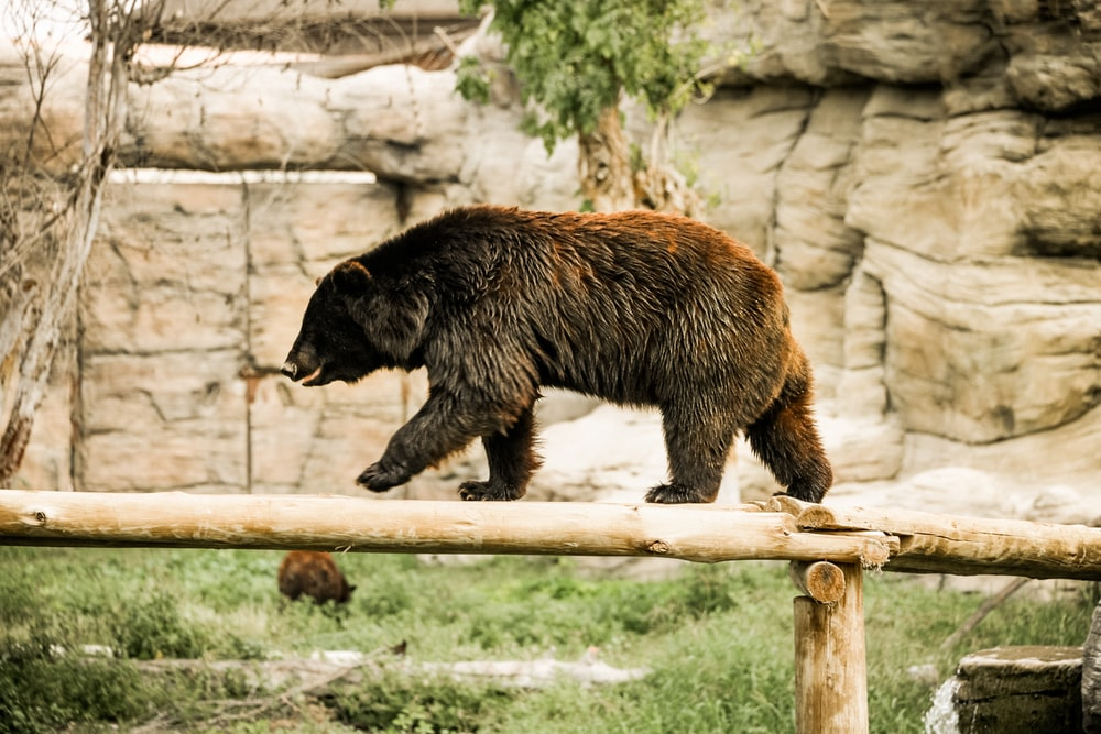 black bear on brown wooden fence during daytime