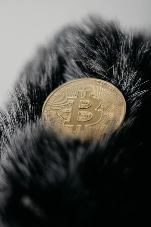 gold round coin on black fur