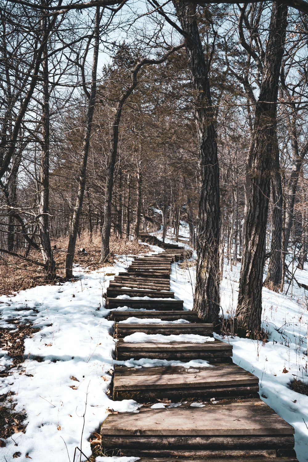 brown wooden stairs covered with snow near brown trees during daytime