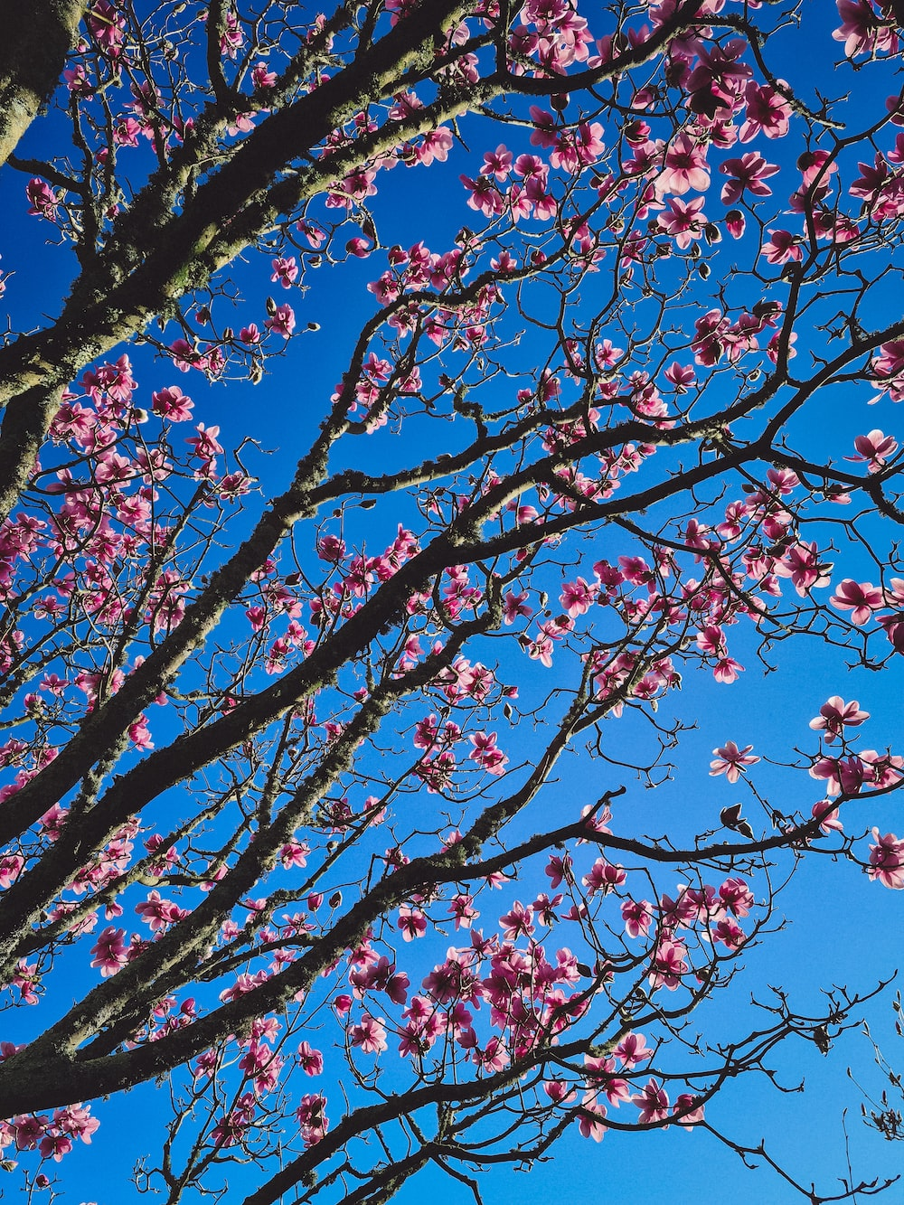 low angle photography of red leaf tree under blue sky during daytime