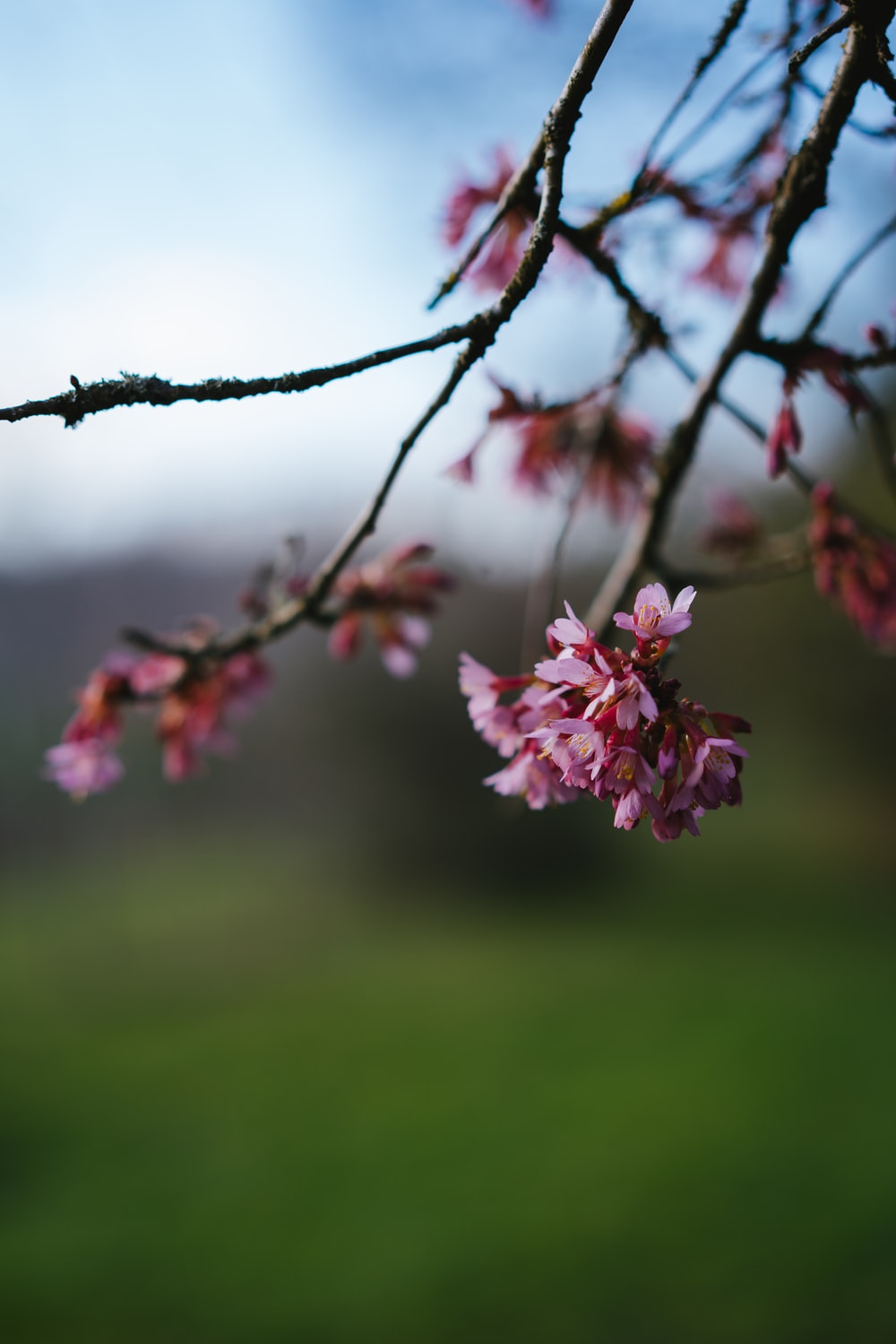pink flower on brown tree branch