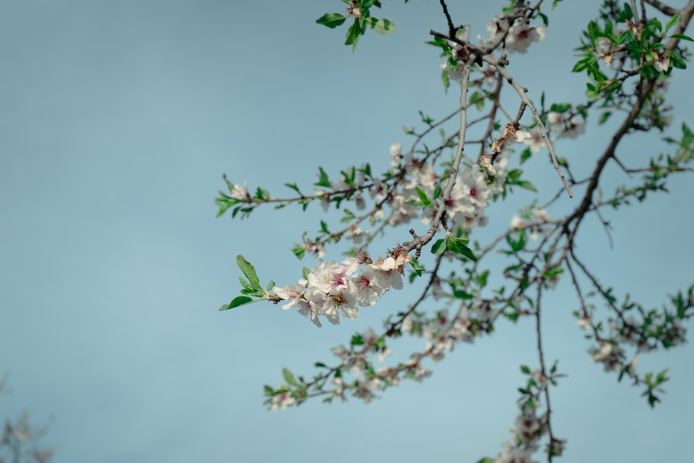pink flower on green tree