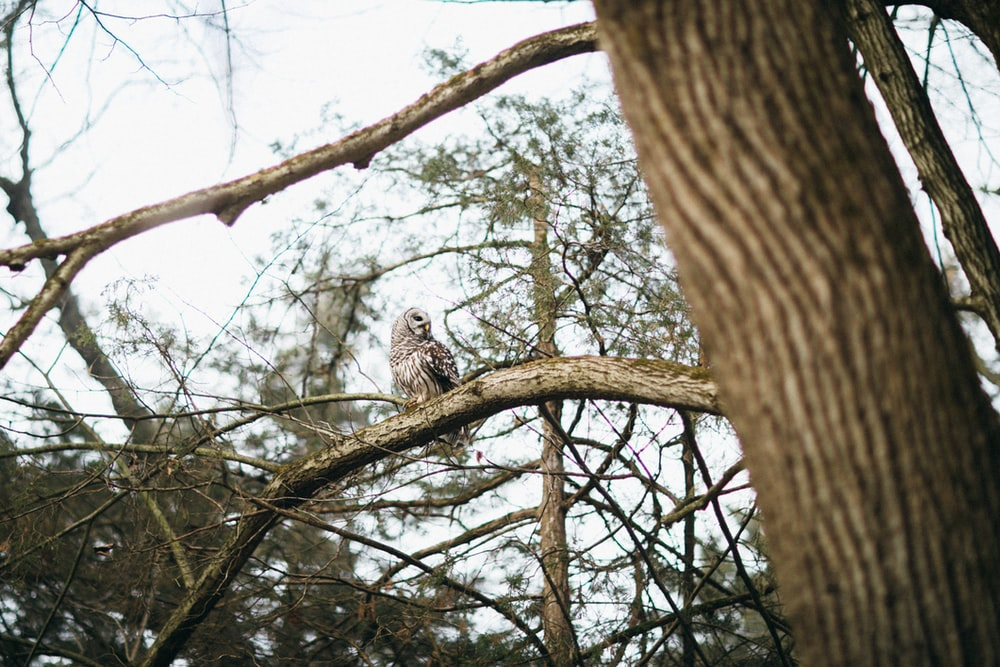 white and brown owl on brown tree branch during daytime